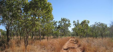 epic bike trek, Dingo Yard, Gregory National Park, Northern Territory