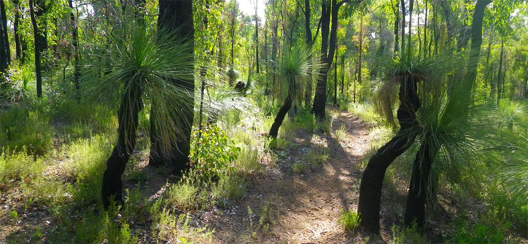 Near Dandenup Shelter, Munda Biddi Trail.